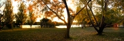 5936p-gold-of-autumn-black-mountain-peninsula-act