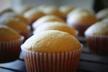 Cupcakes_Honey+Lemon