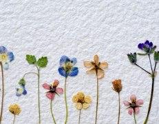 nwf-pressed-flowers-lg